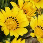 房総半島で花の美しさを再認識できる旅へ出かけてみませんか?@千葉