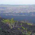 【撮影旅行】強風に吹かれるという最高の自然のアトラクション – 裏砂漠@伊豆大島