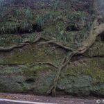 【撮影旅行】まるでラピュタ!自然と人工のコラボレーションによる木のパワーを感じよう! – 泉津の切通し@伊豆大島