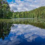 【撮影旅行】フィンランドの大自然!ムーミンの世界を堪能する! – ヌークシオ国立公園@フィンランド