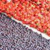 【撮影旅行】市場でベリーが食べられてI like berries very much! – カウッパトリマーケットスクエア@ヘルシンキ